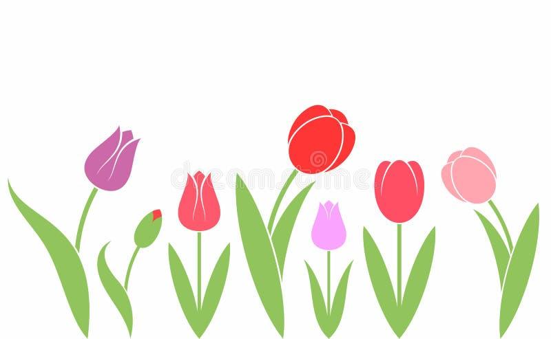 Tulpan bakgrund blommar white vektor illustrationer