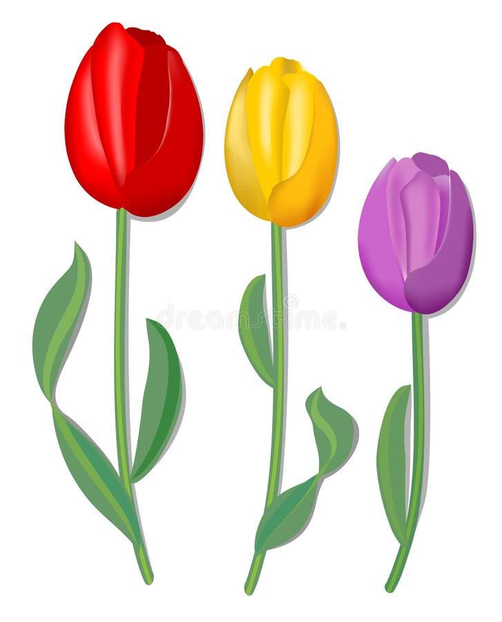 Tulpan för tre vektor för vårdesign i rött, gult och rosa med fin skugga stock illustrationer