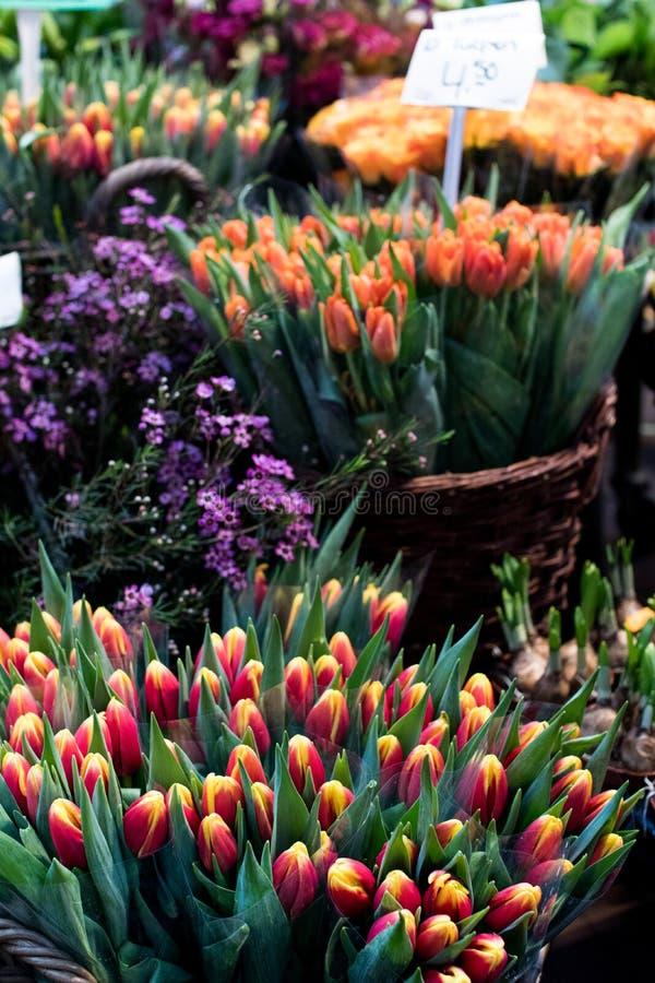 Tulpan i en holländsk marknad med utsatta priser och med olikt royaltyfri bild