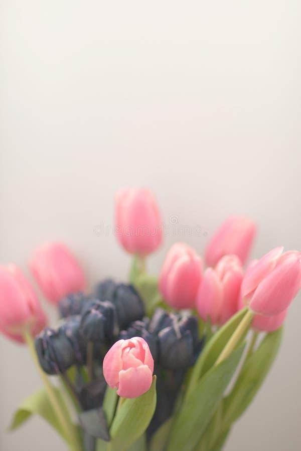 Tulpan i en vas med suddighet och mjuka fokuseffekter Pastell färgad abstrakt tulpan fotografering för bildbyråer