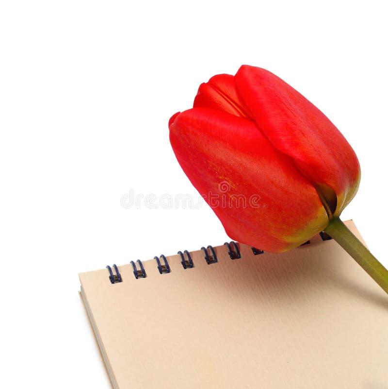 Tulpan med den paper anteckningsboken arkivfoto