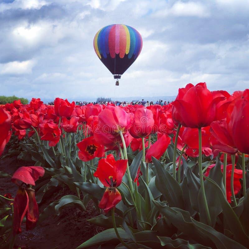 Tulpan och ballong arkivbild