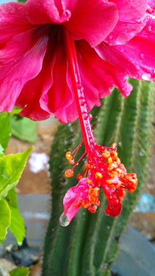 Tulpan och cactacea royaltyfri fotografi