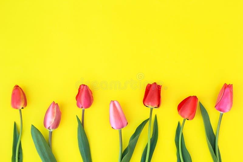 Tulpan på en gul bakgrund arkivfoto