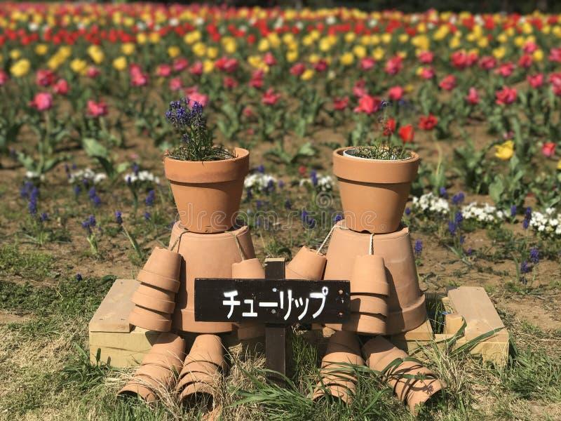 Tulpan på Hananooka parkerar arkivfoton
