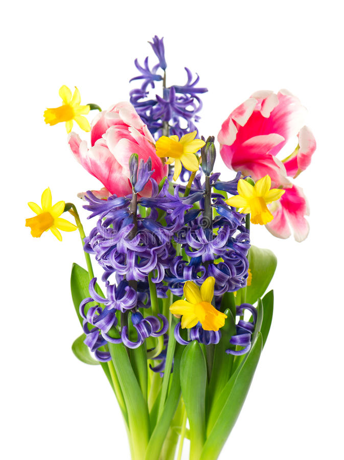Tulpan, pingstlilja och hyacint. fjäderblommor arkivfoton