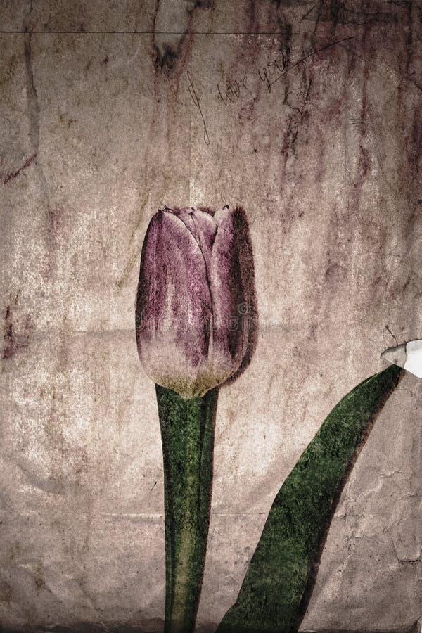 Tulpanblomma på åldrigt gulnat papper med ett meddelande fotografering för bildbyråer
