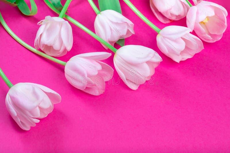 Tulpanblommor på färgrik bakgrund med kopieringsutrymme härlig blommafjäder royaltyfri bild