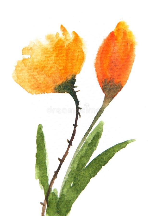 Tulpanblommor, vattenfärgmålning stock illustrationer
