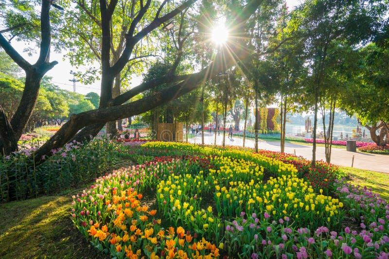 Tulpanträdgård i Chiang Rai thailand arkivbild