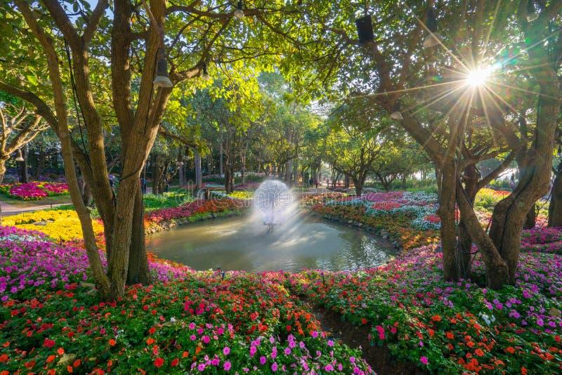 Tulpanträdgård i Chiang Rai thailand royaltyfri fotografi