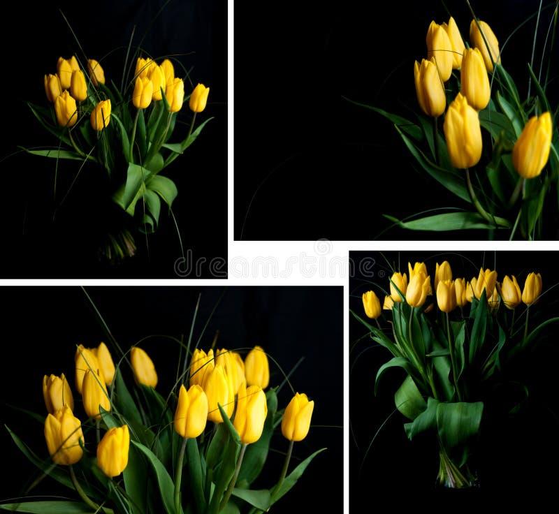 tulpanyellow royaltyfria foton
