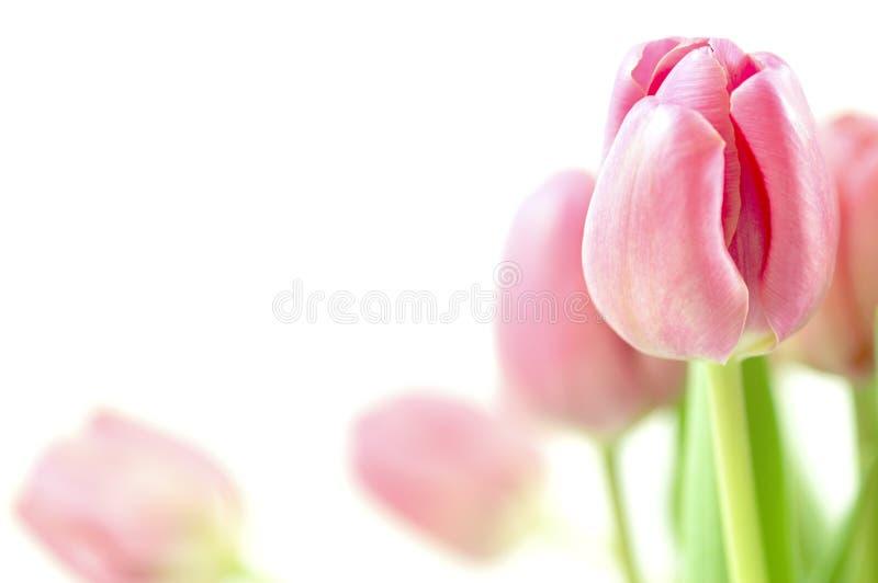Tulpe-Anordnung lizenzfreie stockbilder
