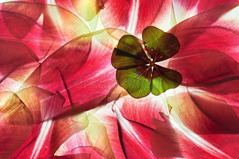 Tulpe-Blätter lizenzfreie stockfotos