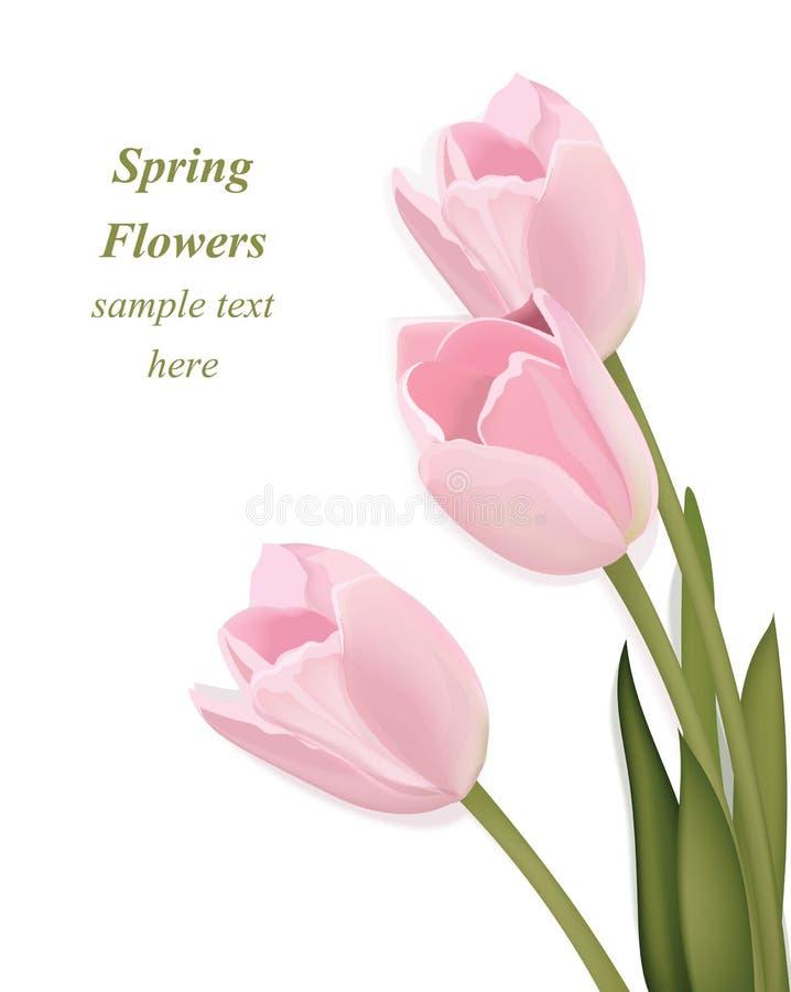 Tulpe blüht Blumenstraußgrußkarte Frühling kommt Vektorillustration Dekor des Aquarells realistische lizenzfreie abbildung