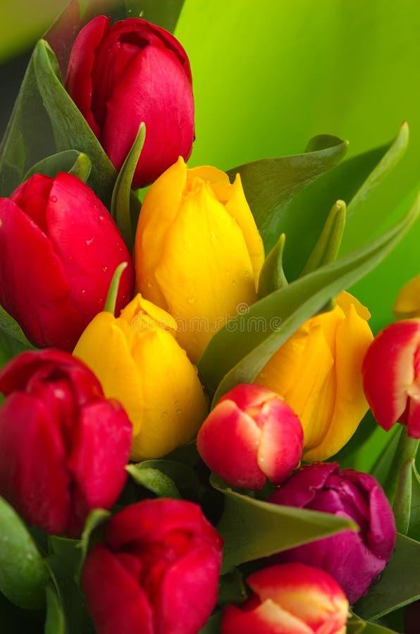 Tulpe-Blumenstrauß lizenzfreie stockbilder
