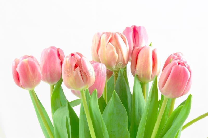 Tulpe-Blumenstrauß stockfotografie