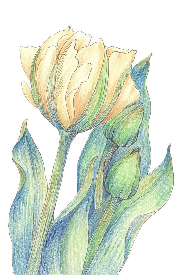 Tulpe - eine Zusammensetzung von Blumen tapete lizenzfreie abbildung