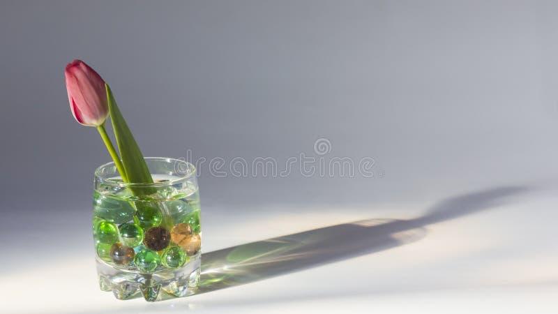 Tulpe in einem Glas stockfotografie