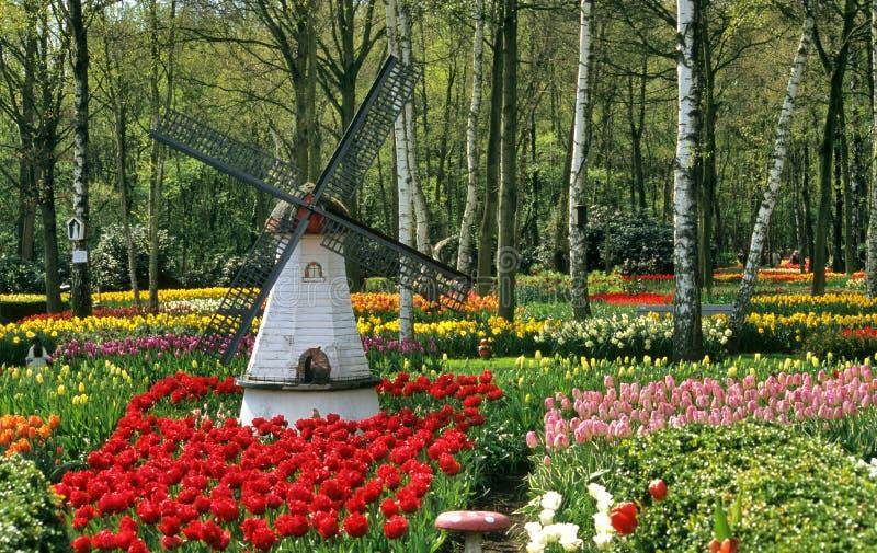 Tulpe-Garten-Windmühle stockbild