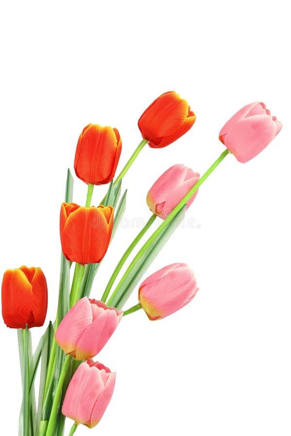 Tulpe ist der Blumenstrauß lizenzfreie stockfotos