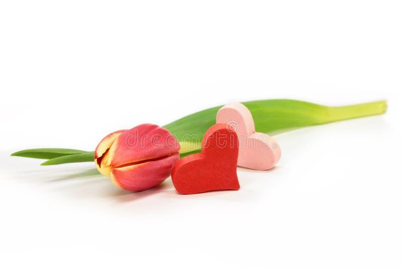 Tulpe mit Herzen stockfotos