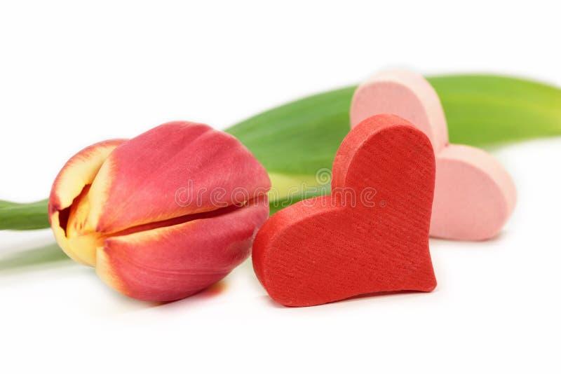 Tulpe mit Herzen stockfoto