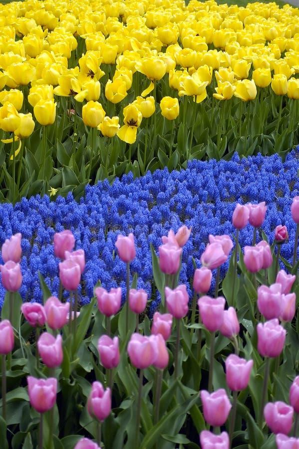Tulpe-Muster stockbild