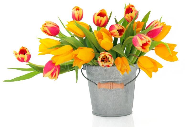 Tulpe-Schönheiten stockfotos