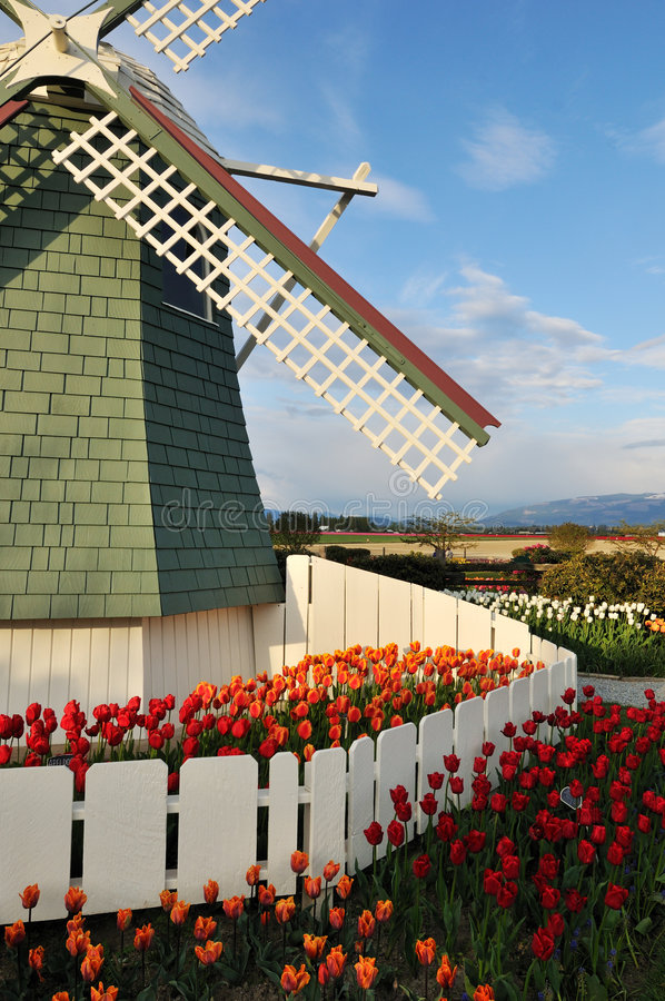Tulpeblumen und -windmühle lizenzfreies stockfoto