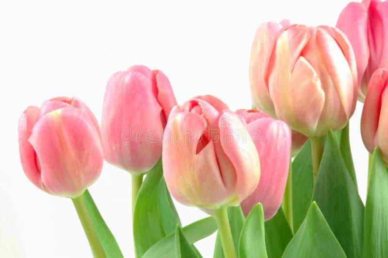 Tulpeblumenstrauß lizenzfreies stockbild