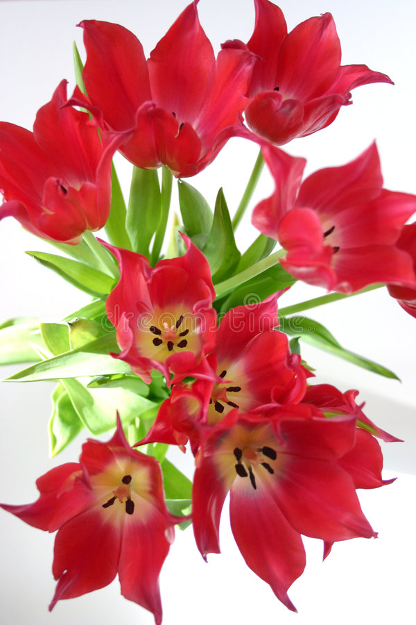 Tulpen stockbild