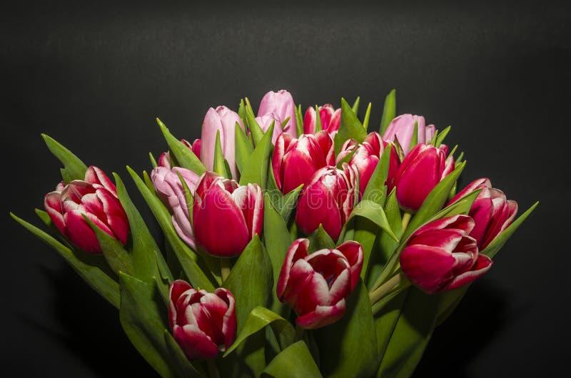 Tulpen lizenzfreie stockfotos