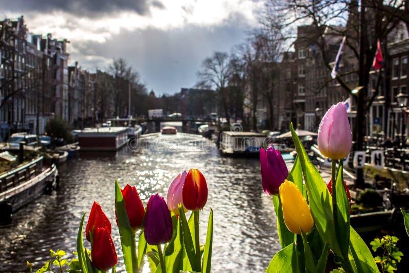 Tulpen - Amsterdam - Gebouwen stock foto's