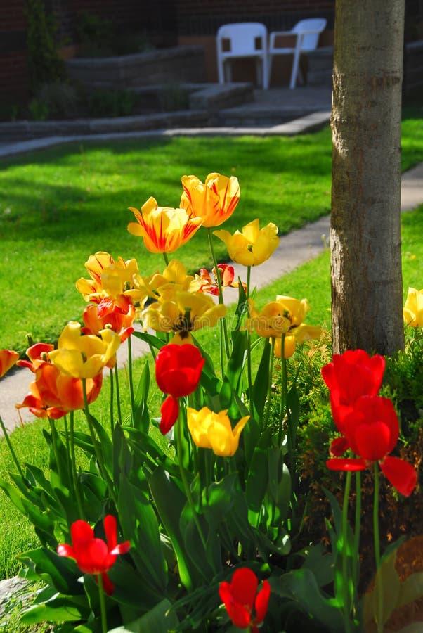 Tulpen bij een huis stock fotografie