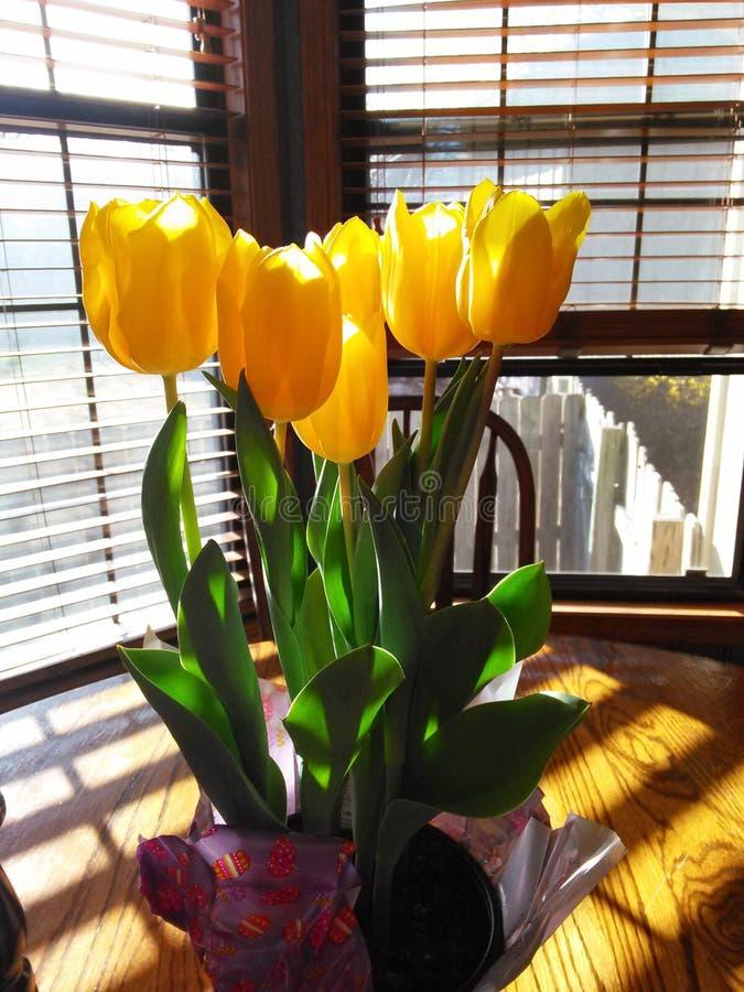 Tulpen in de zon royalty-vrije stock fotografie