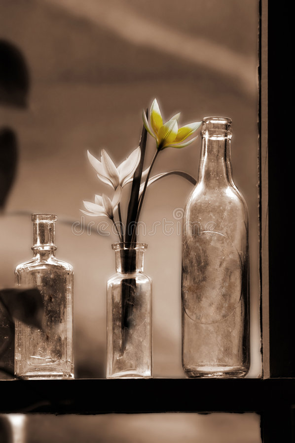 Tulpen in der Flasche lizenzfreie stockfotografie