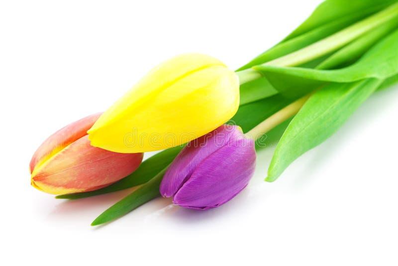 Tulpen die op wit worden geïsoleerd royalty-vrije stock foto