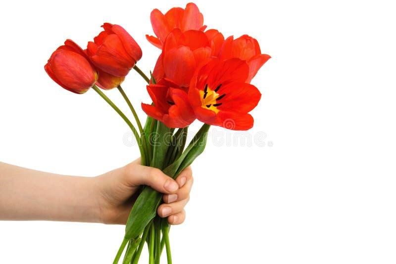 Tulpen in een hand stock afbeelding