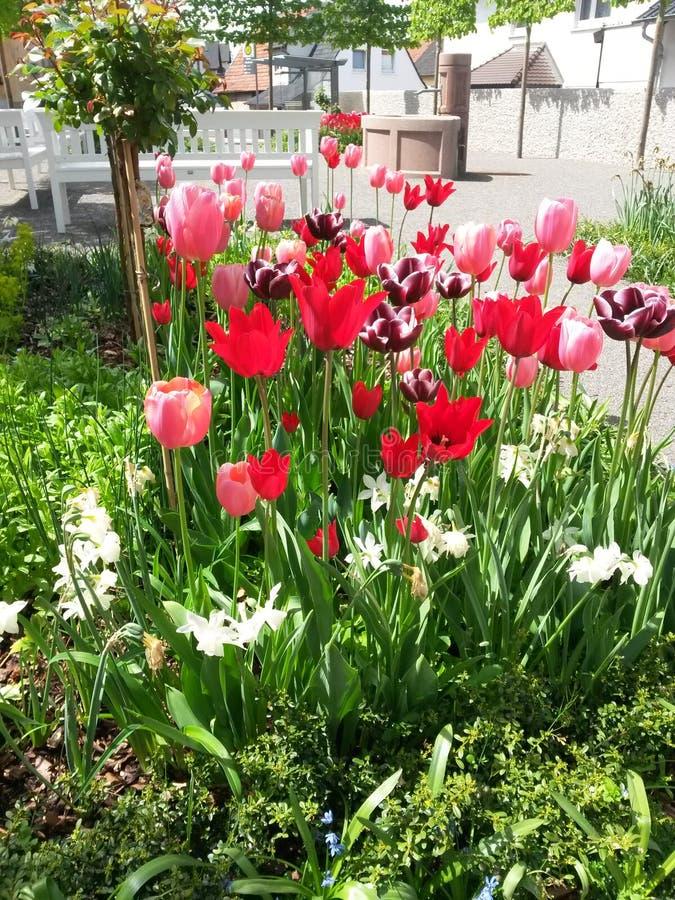 Tulpen in een klein park royalty-vrije stock foto
