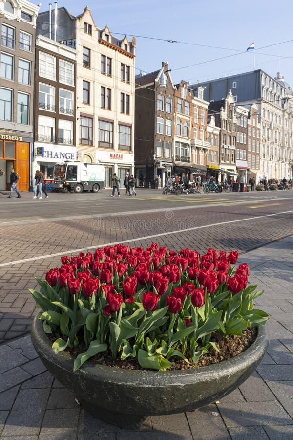 Tulpen em Amsterdão imagens de stock