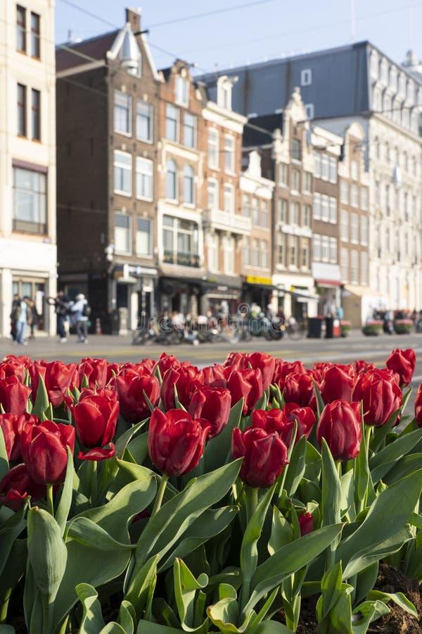 Tulpen em Amsterdão encontrou-se para grachtenpanden fotografia de stock royalty free