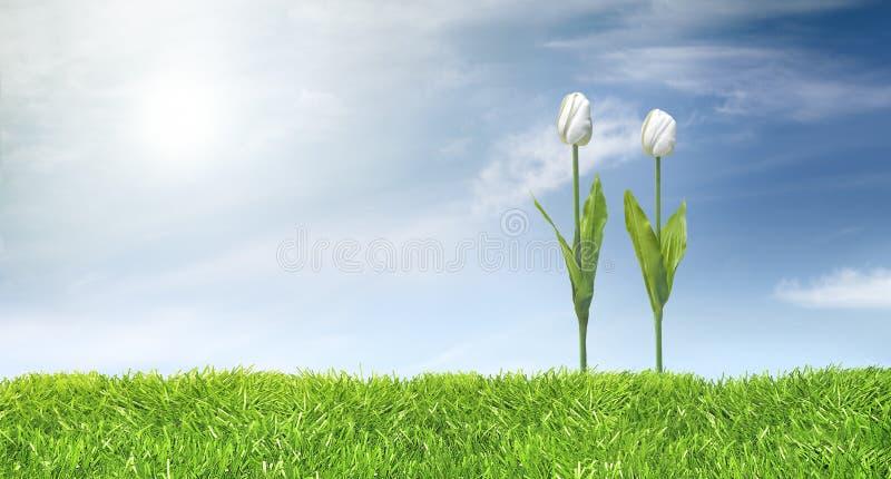 Tulpen en groene graslijn stock fotografie