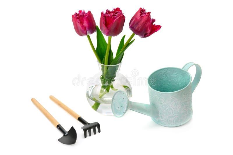 Tulpen en tuinmateriaal op wit wordt geïsoleerd dat royalty-vrije stock afbeelding