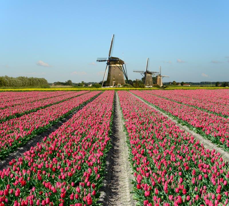 Tulpen en windmolens in Holland royalty-vrije stock foto's