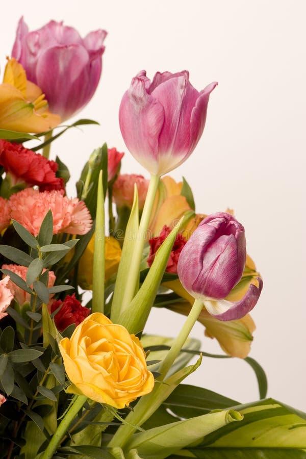 Tulpen, Gartennelken u. Rosen stockbilder