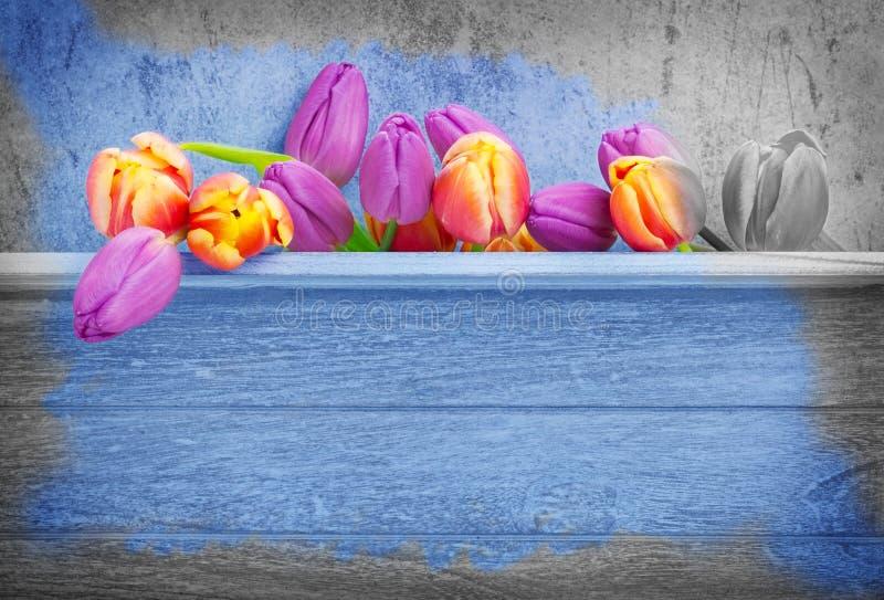 Tulpen, houten achtergrond royalty-vrije stock foto's