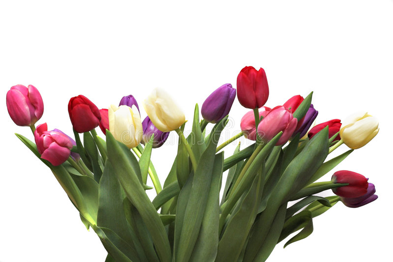 Tulpen II royalty-vrije stock afbeeldingen