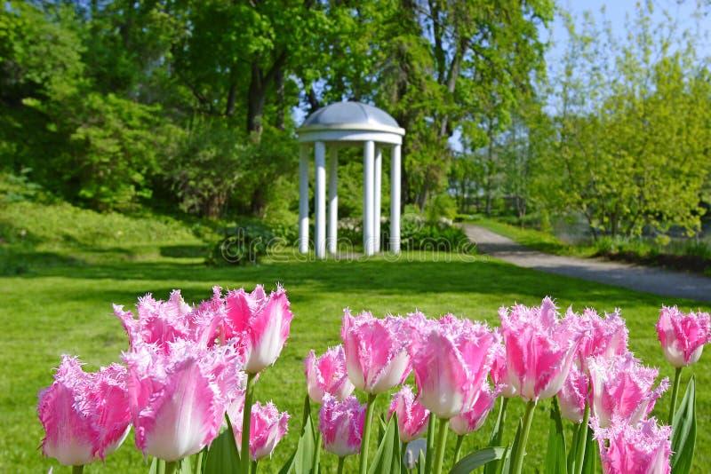 Tulpen im botanischen Garten stockfotografie