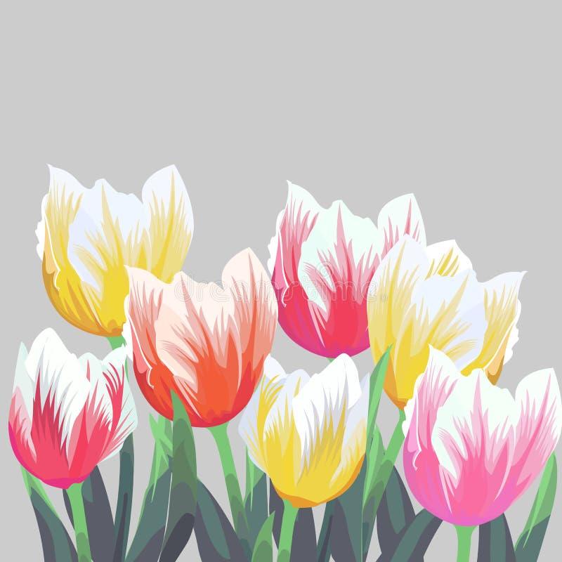 Tulpen Kleuren vectordietulpen op grijze achtergrond worden geïsoleerd Bloemen in verschillende vormen voor uw ontwerp en groeten vector illustratie